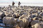 Пастухи пасут стадо овец. Архивное фото