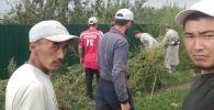Бригада во время ликвидации незаконных посевов и очагов произрастания дикорастущей конопли и других наркосодержащих растений в Иссык-Кульской области
