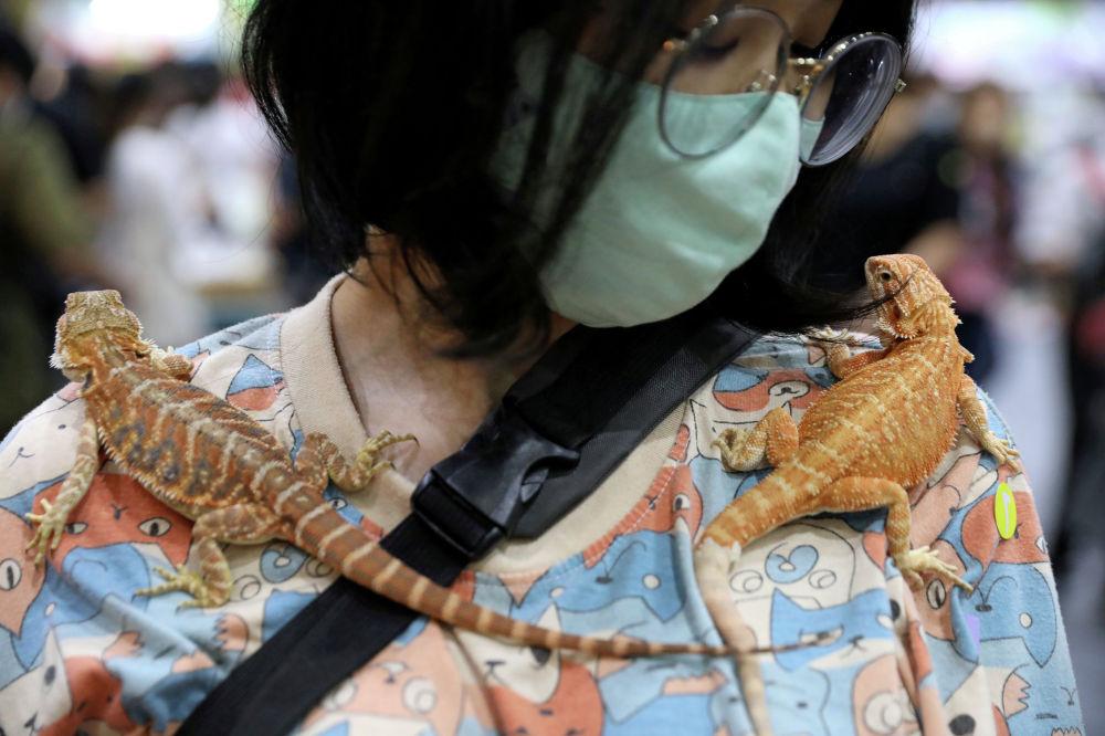 Женщина несет двух гекконов на плечах на выставке Pet Expo Thailand в Бангкоке, Таиланд, 6 сентября 2020 г.