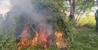На государственной границе в Джалал-Абадской и Баткенской областях сожгли растущую коноплю весом 7,2 тонны