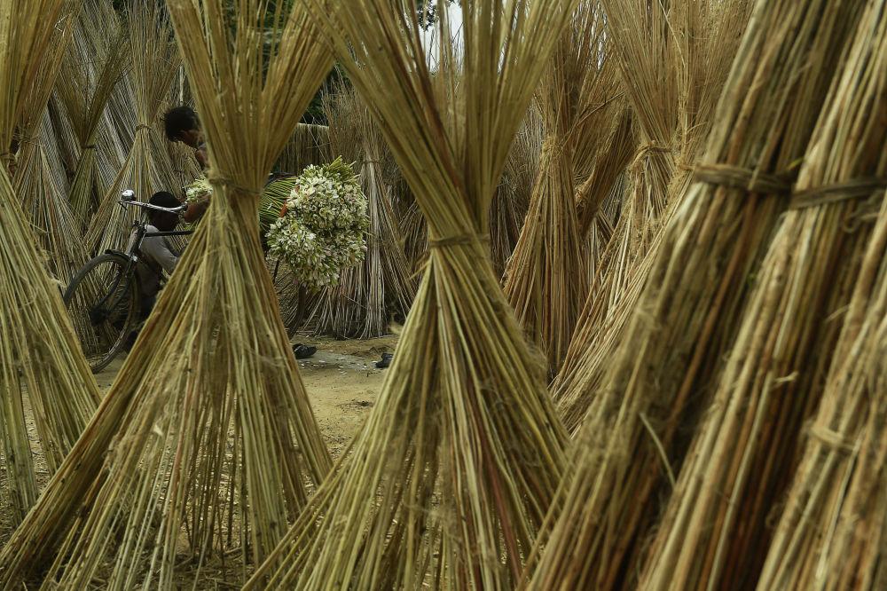 Фермер из Калькутты (Индия) везет на велосипеде водяные лилии на продажу