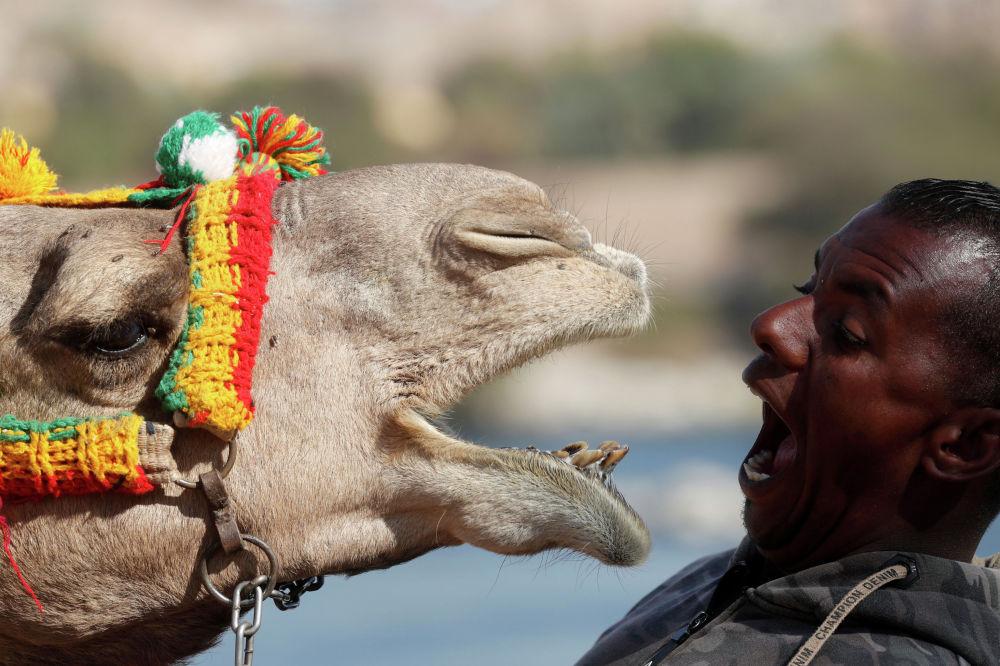 Житель нубийской деревни на юге Египта играет со своим верблюдом. 19 февраля 2020 года