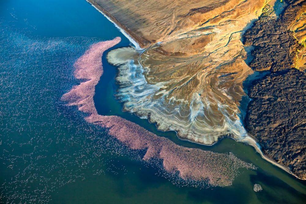Работа Мартина Харви (Martin Harvey) под названием Фламинго на озере Логипи заняла второе место в категории Природа