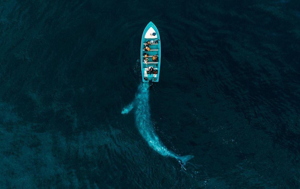 Джозеф Чейрез (Joseph Cheires) не раз слышал истории о сером ките, который играет с лодками туристов, мягко подталкивая их. В итоге ему удалось запечатлеть это животное — работа победила в категории Природа.