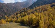 Акыркы аптада ЖМК беттери саясий жаңылыктарга бай болду. Sputnik Кыргызстан агенттиги сизди саясаттан алыстап, Бишкектин жака белиндеги кооз жайларга саякаттоого чакырат.