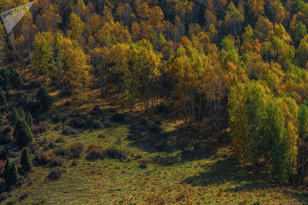 Осенью листва сотен берез окрашивается в желтые и ярко-красные цвета