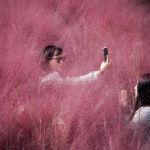Женщина делает селфи, пока ее подруга поправляет макияж в поле с розовой травой на фоне пандемии коронавируса (COVID-19) в парке в Ханаме, Южная Корея, 13 октября 2020 года