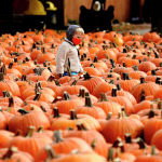 Мальчик в маске смотрит вокруг тыкв на фермах Дидье в Линкольншире, штат Иллинойс. 15 октября 2020 года