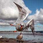 Чайки на побережье Балтийского моря в Германии