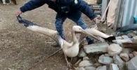 Мамэкотехинспекция браконьерлик кылгандар жазаланарын эскертип, айлана-чөйрөгө аяр мамиле жасоого чакырды.
