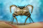 Лучший снимок паука в категории Арахниды