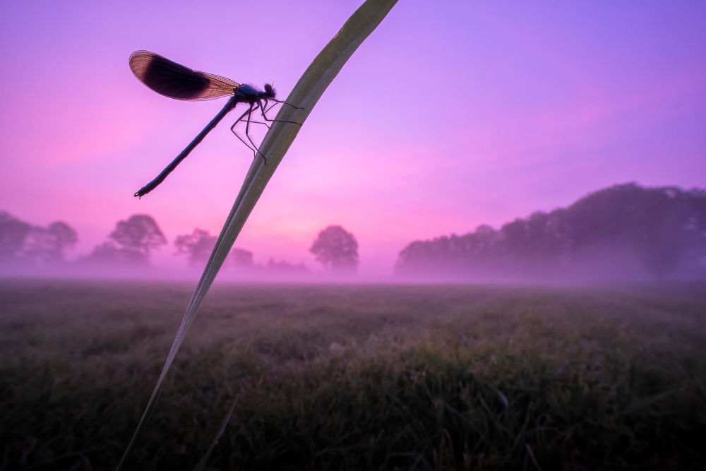 Стрекоза на закате