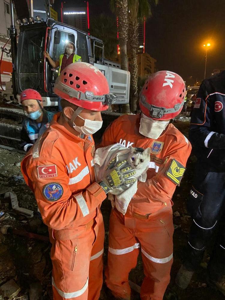 Члены поисково-спасательного батальона турецкой жандармерии держат кошку, спасенную из обрушившегося здания