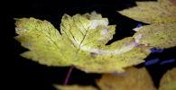 Капли дождя на пожелтевшей листве. Архивное фото