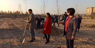 Бишкектин Байтик баатыр менен Токомбаев көчөсүндө жаңы курулуп жаткан Балалык паркына 40 кайыңдын көчөтү отургузулду