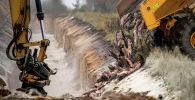 Утилизация мертвой норки в военной зоне недалеко от Хольстебро в Дании