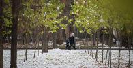 Молодые деревья на бульваре Эркиндик в Бишкеке. Архивное фото
