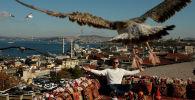 Стамбулдагы кафенин үстүнөн ак чардак учуп жатат. Архив