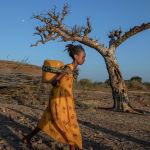 Эфиопиянын Тиграй аймагында аял артына суу көтөрүп алып Гедарефтеги (Чыгыш Судан) качкындар лагерине бара жатат