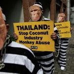 Жаныбарлардын укугун коргогон РЕТА уюмунун активисттери чынжырланган маймылдай болуп кийинип алып Таиланд королдугунун Макатидеги (Филиппин) элчилигинин жанында