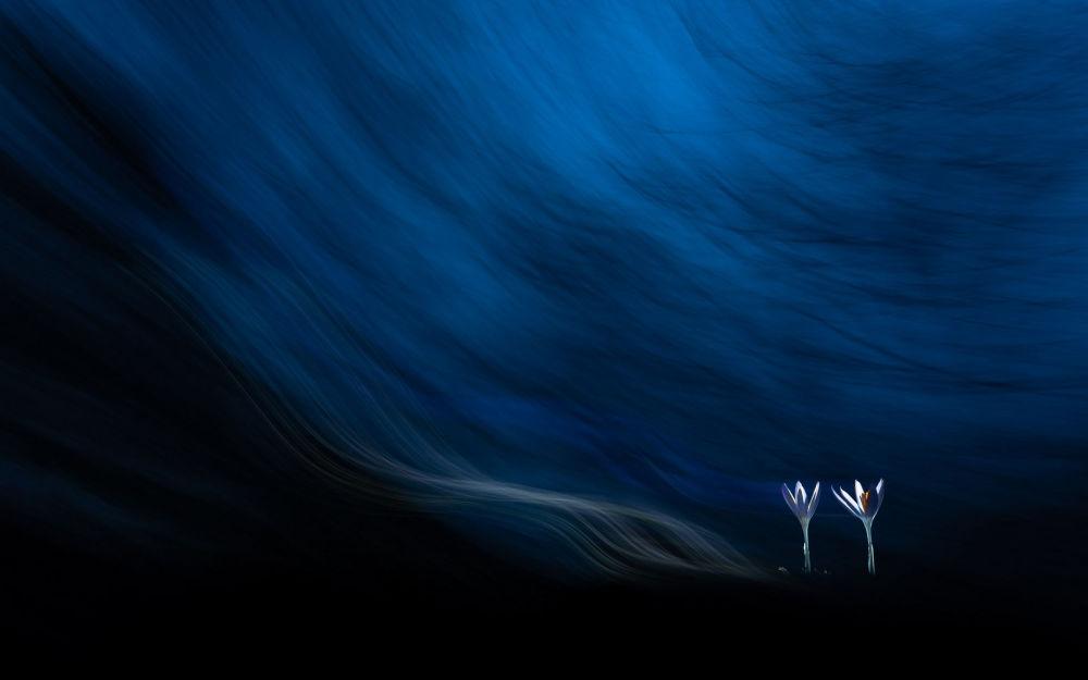 Венгриялык Тибор Литаускинин сүрөтү Өсүмдүктөрдүн магиясы номинациясында көп эмгектин арасынан тандалып алынды