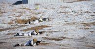 Военнослужащие на комплексных командно-штабных учений отрабатывают нападение террористов в учебном центре Ала-Тоо