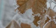 Иней на листве в Бишкеке. Архивное фото