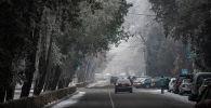 Иней на деревьях вдоль проспекта Эркиндик в период аномальных холодов в Бишкеке