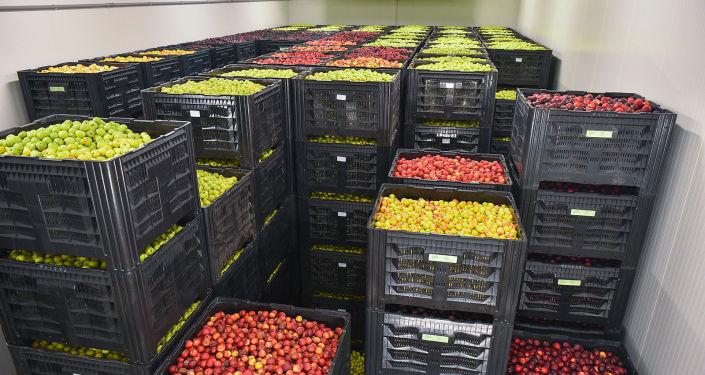 Сельскохозяйственная продукция в логистическом центре в городе Балыкчы