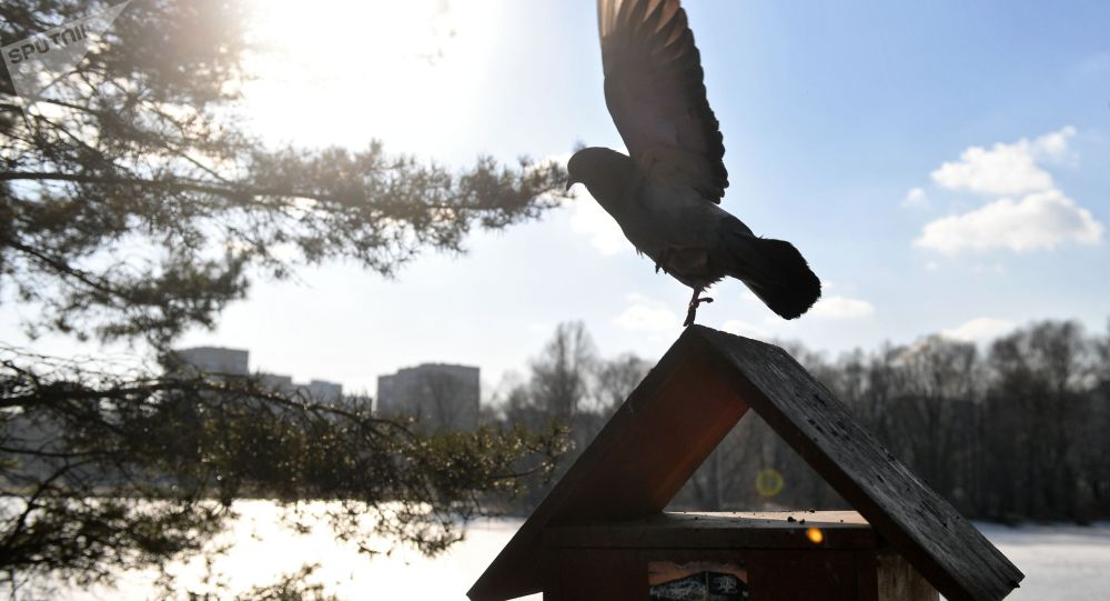 Голубь на кормушке для птиц в парке. Архивное фото