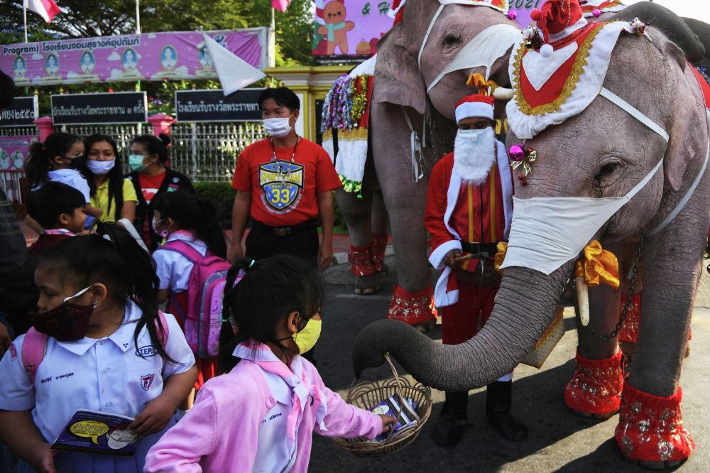 Слоны помогают раздавать защитные маски в городе Аюттайе, Таиланд