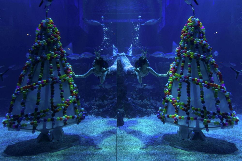 Дайвер в костюме русалки возле рождественской елки в океанариуме в Джакарте. Индонезия, 22 декабря 2020 года