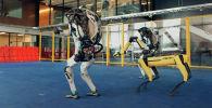 Роботы американской компании Boston Dynamics порадовали своих поклонников, впервые станцевав всем семейством на одной площадке.