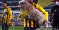 Матч чемпионата Боливии по футболу был прерван из-за выбежавшего на поле бездомного пса. Рефери пришлось остановить игру на три минуты.
