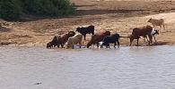 Африканын Крюгер улуттук паркына барган 51 жаштагы саякатчы Лин ван Бильон сууда жырткычтардын бири-биринен тамак талашып жатканын тартып алды.