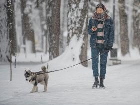 Жаңырган жылдын алгачкы кары. Тазара түшкөн Бишкектин 13 сүрөтү