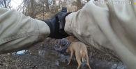 В США лесной рейнджер точным выстрелом спас сцепившихся во время драки рогами оленей, которые никак не могли освободиться.