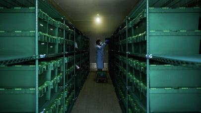 Лабораториянын кызматкери Covid-19 тестинин үлгүлөрүн алып кетип жатат