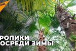 Казакстандын Нур-Султан шаарындагы Астана ботаникалык багында банан, апельсин, кокос, курма жана көптөгөн цитрус өсүмдүктөрү менен гүлдүн түрлөрү өсөт.