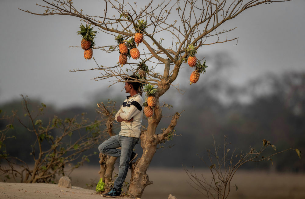Индиянын Гувахати шаарынын аймагында мөмө-жемиш саткан соодагер