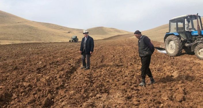 Жаз эрте келген Баткен облусунун Лейлек районунун Кулунду айыл аймагында 500 гектар жерге арпа себилди