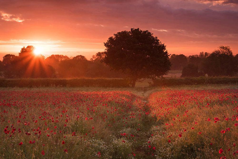 Снимок Маковое поле Саймона Ли из Великобритании признали лучшим в категории Дикие цветы и пейзажи