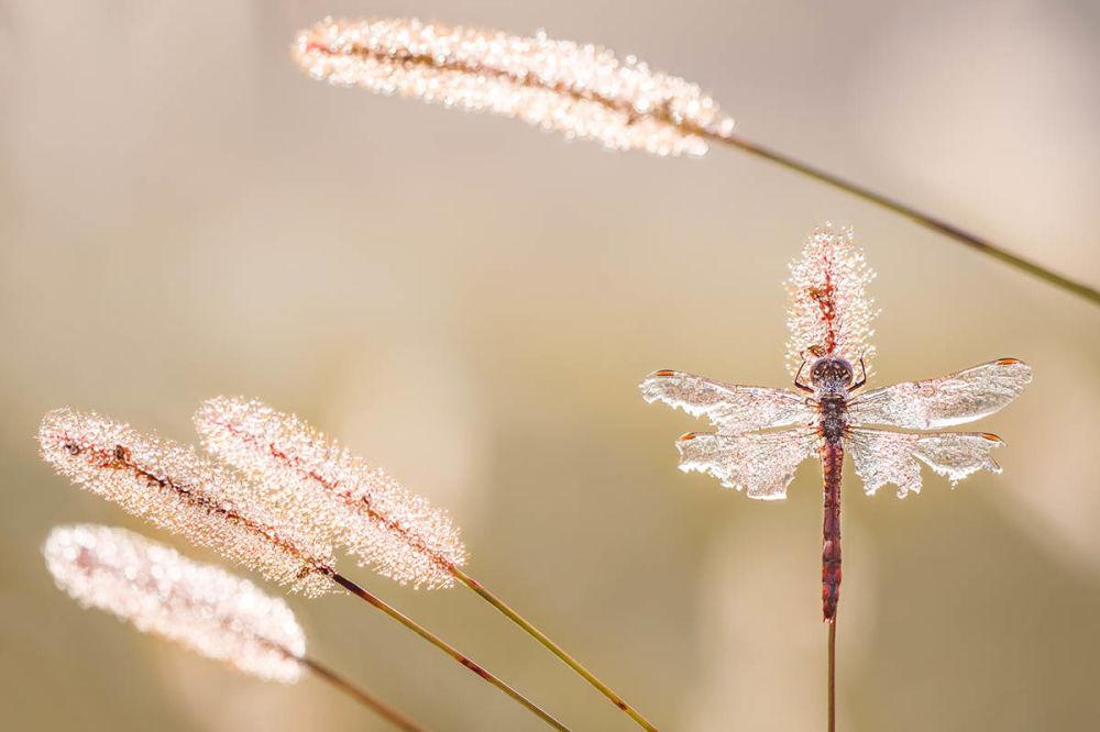 Хорват Петар Сабол победил в категории Дикая жизнь в саду с фотографией Уцелевший