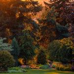 Кадр Гобелен Божены Пиотровска из Польши занял второе место в категории Прекрасные сады