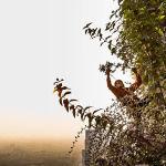 Игра тонких балансов — так назвал свою работу итальянец Маттео Карассале, ставший финалистом в категории Растения и планета