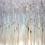 Кадр Затопленные березы принес победу Джанлуке Джанферрари в категории Деревья и леса