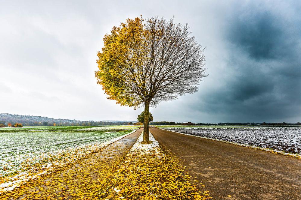 Снимок Осенне-зимнее дерево немецкого фотографа Клары Ванджуры стал финалистом в категории Деревья и леса