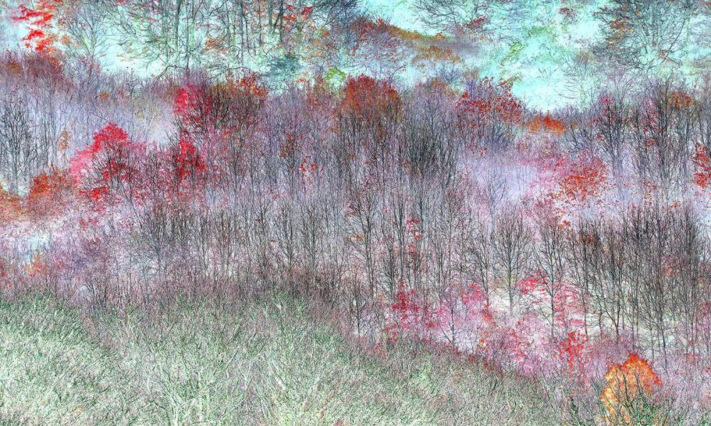 Работа Магические деревья британца Клэра Огдена победила в категории Абстрактное видение