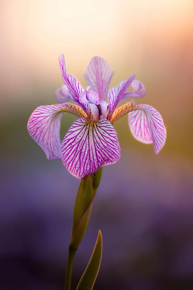 Снимок Фиолетовые вены Клаудии Гаупп получил второе место в категории Красота растений