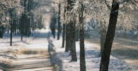 Заснеженные деревья. Архивное фото
